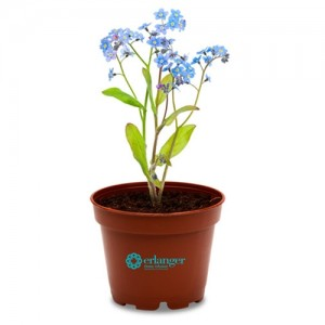 Check out our selection of mini promotional plants to grow your brand's reach
